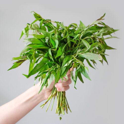 """Rdesno vonné (lat. Persicaria odorata) - Asijské bylinky """"ZÁSADNĚ"""" ZDRAVĚ"""