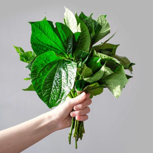 """Pepřovník lolot (lat. Piper lolot) - Asijské bylinky """"ZÁSADNĚ"""" ZDRAVĚ"""