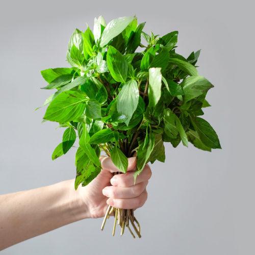 """Bazalka thajská (lat. Ocimum basilicum var. thyrsiflora) - Asijské bylinky """"ZÁSADNĚ"""" ZDRAVĚ"""