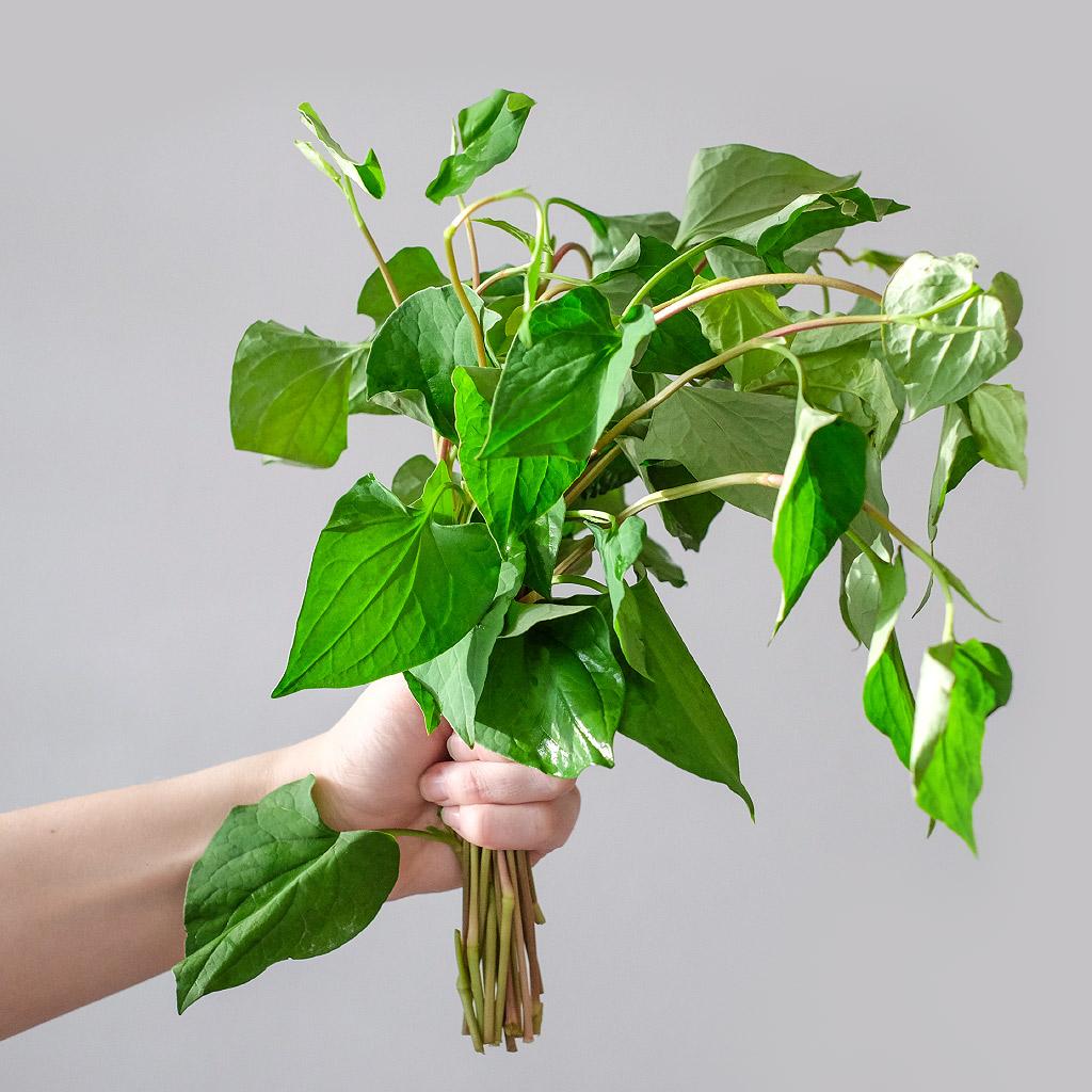 """Touleň srdčitá (lat. Houttuynia cordata) - Asijské bylinky """"ZÁSADNĚ"""" ZDRAVĚ"""