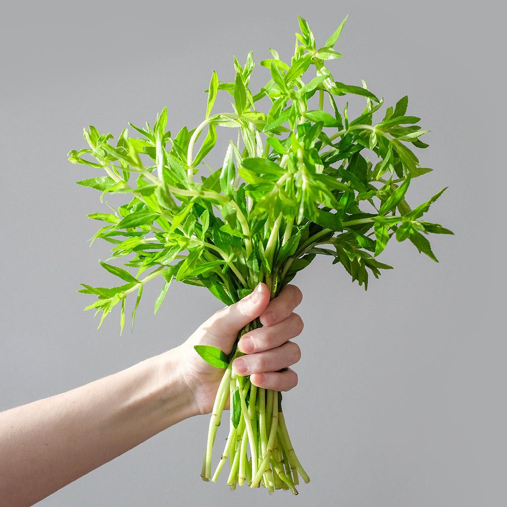 """Bahnatka vonná (lat. Limnophila chinensis var. aromatica) - Asijské bylinky """"ZÁSADNĚ"""" ZDRAVĚ"""